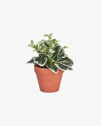 Planta artificial Aucuba con maceta marrón 22 cm