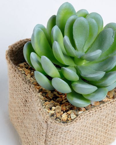 Pachyphytum artificial plant