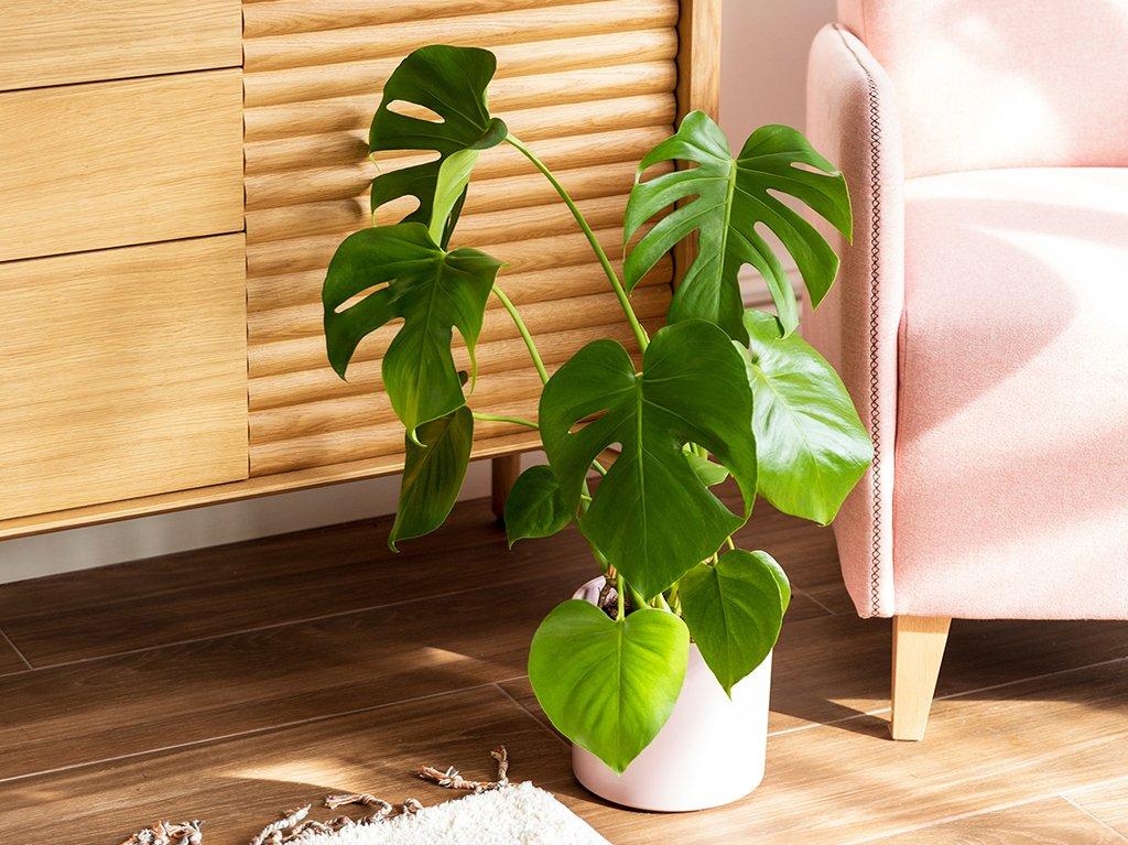 Plantas-altas-interior-01.jpg