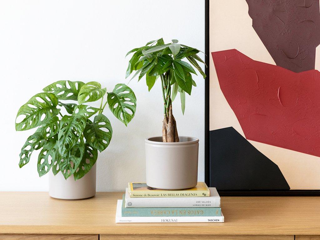 Plantas-altas-interior-02.jpg