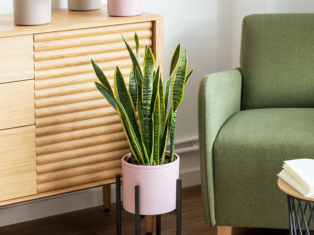 Plantas-altas-interior-03.jpg