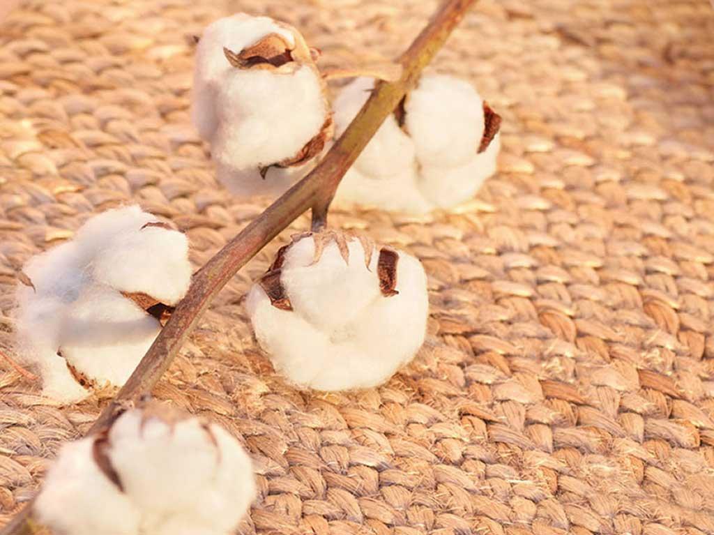 coton-bio.jpg