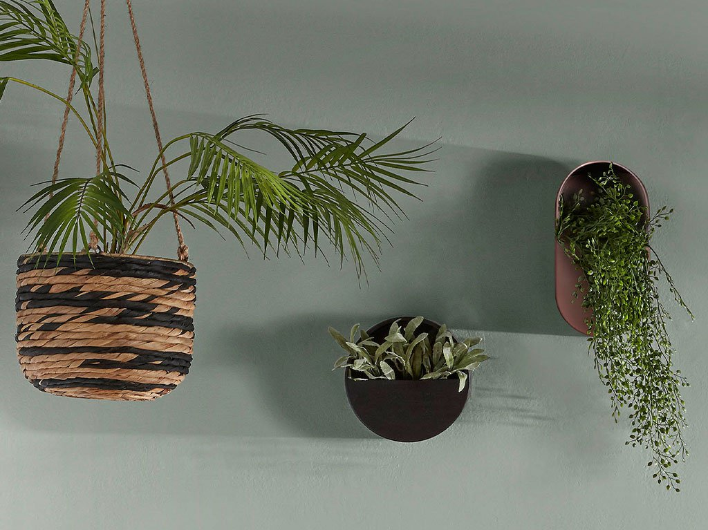 macetero-pared-planta-colgante.jpg