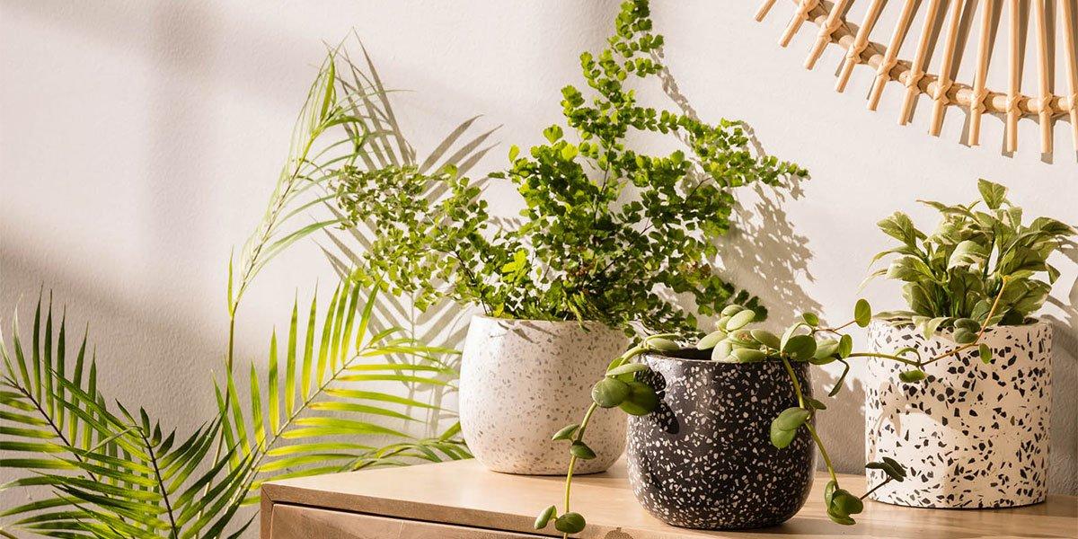 portada-jardin-plantas.jpg