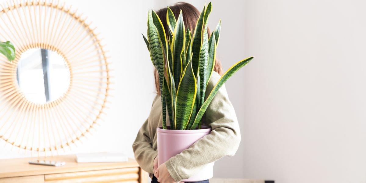 salon-decoracion-plantas-portada